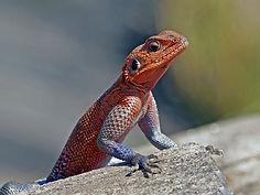 lizard_20.jpg