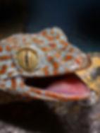 lizard_11_edited.jpg
