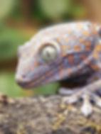 lizard_09_edited.jpg