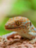 lizard_14_edited.jpg