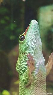 lizard_03.jpg