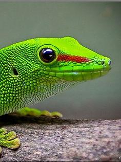lizard_04_edited.jpg