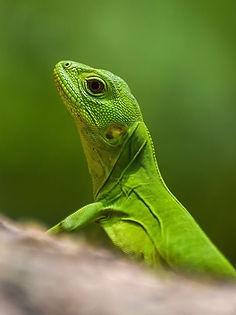 lizard_18_edited.jpg