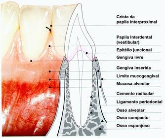anatomia.jpg