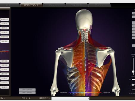 姿勢分析「peek a body」