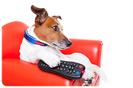 photodune-8625516-dog-tv-xl.png