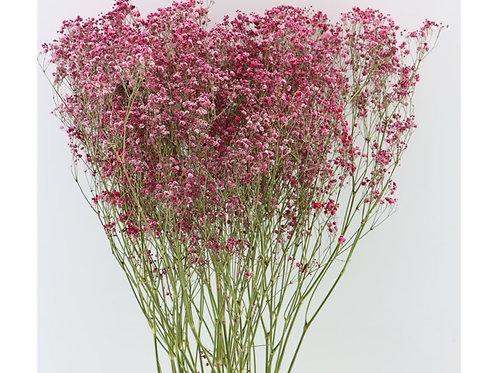 Droogbloemen - Gyps dark pink