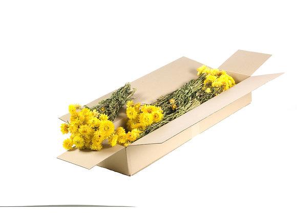 Droogbloemen - Helichrysum geel
