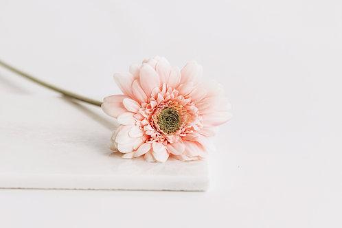 Gerbera roze