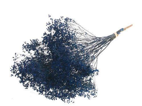 Droogbloemen - Broom dark blue