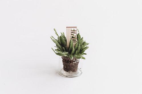 Plantensteker (10 stuks)
