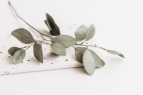 Eucalyptus takje