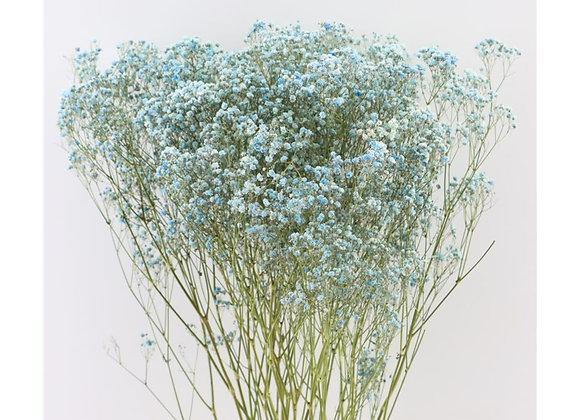 Droogbloemen - Gyps light blue