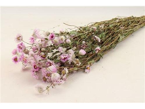 Droogbloemen - Rhodante pink