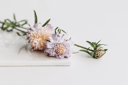 Scabiosa paars