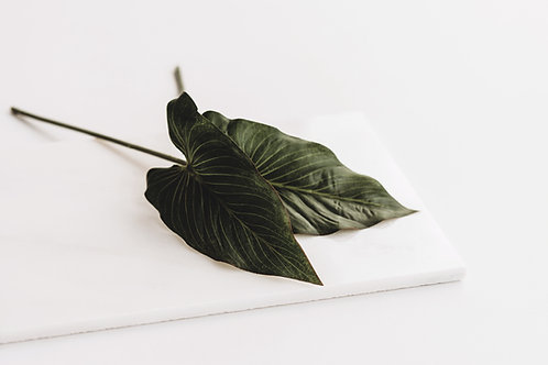 Philodendron (3 takjes)