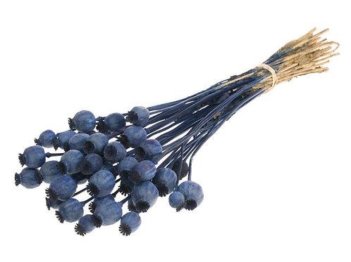 Droogbloemen - Papaver dark blue
