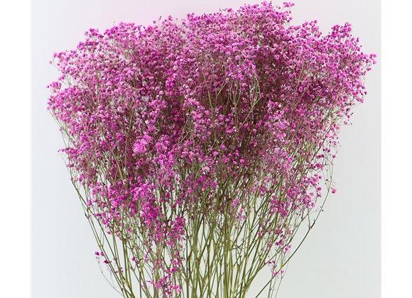 Droogbloemen - Gyps fuchsia
