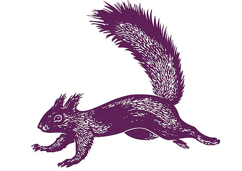 National Trust Squirrel Illustration.jpg