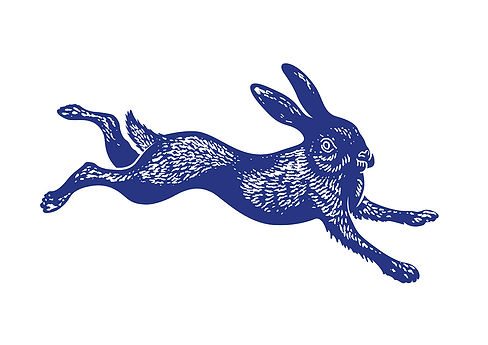 National Trust Hare Illustration.jpg