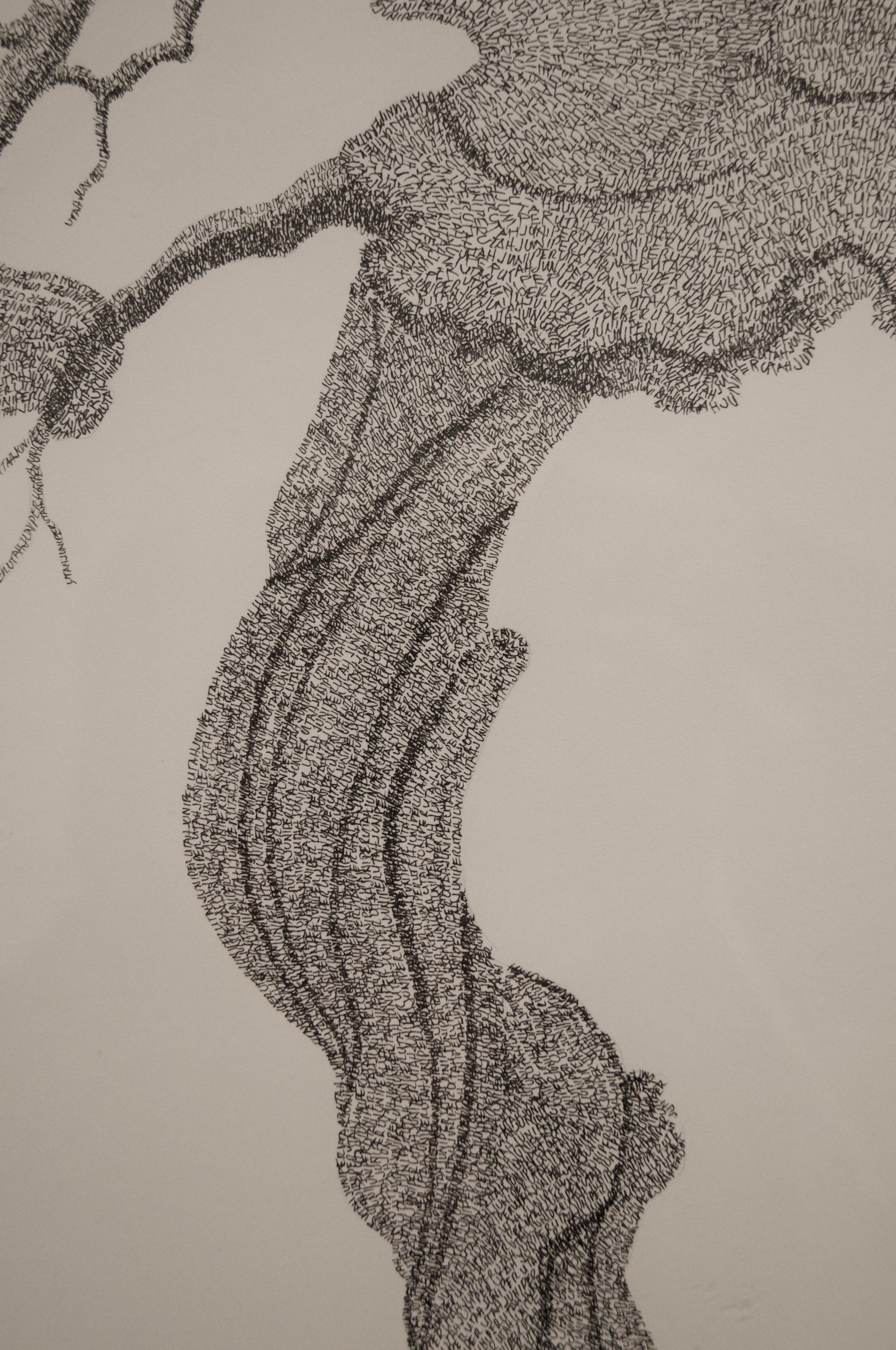 Utah Juniper, detail