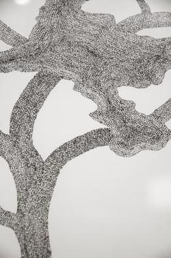 Torrey Pine, detail