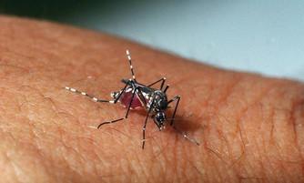 Ministro anuncia diagnóstico da zika, dengue e chikungunya simultâneos