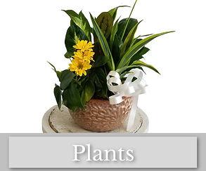 Plants Album (1).jpg