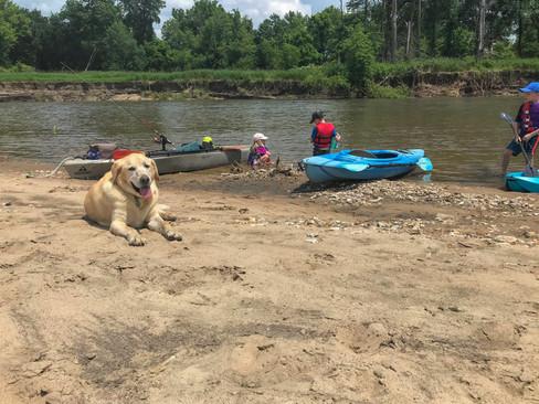 Dog and Kids playing on Turkey River Sandbar (1 of 1).jpg