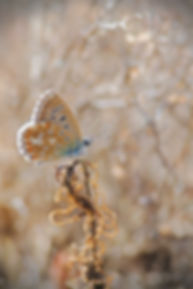 Delicate Balance Butterfly