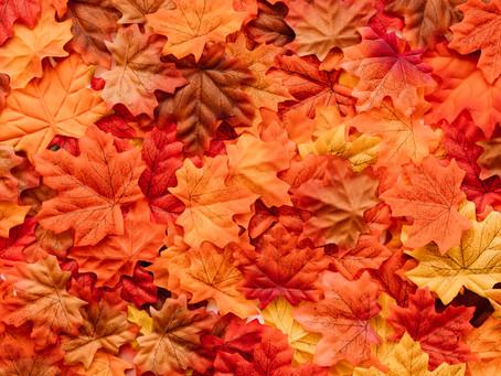 L'automne, la saison du Poumon