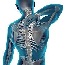 spine2.jpg