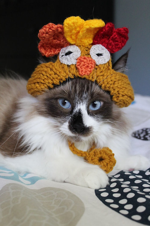 Handmade Cat Hats - Turkey