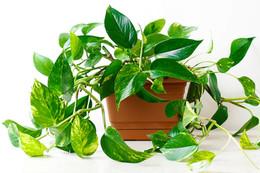 Seven Best Houseplants for Beginners