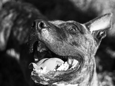 Glenpark Pups || hart Rescue