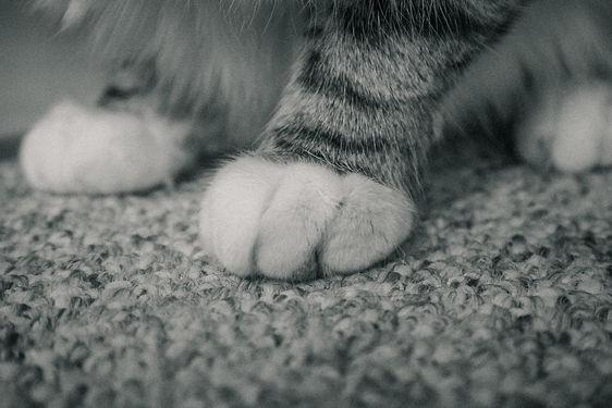 Kitties 4.1.19-24.jpg