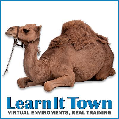 animals - camel