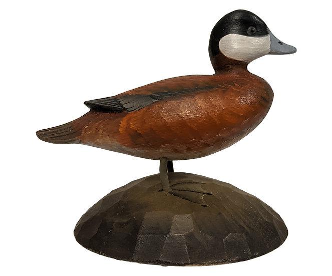 Ruddy Duck - George Strunk