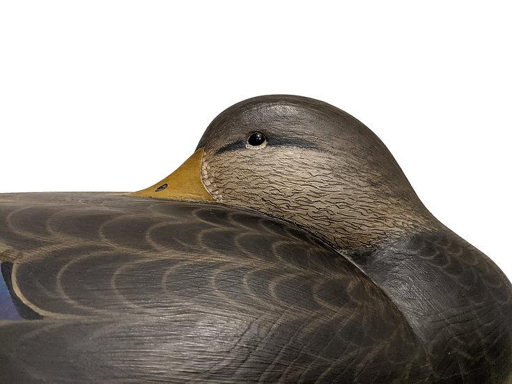 Resting Black Duck - Marty Hanson