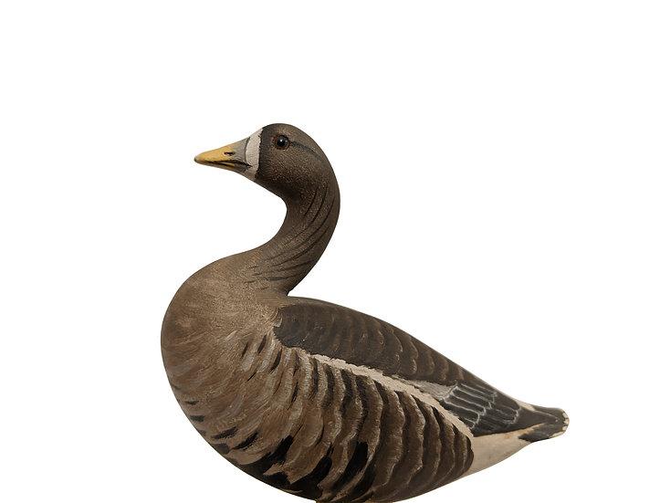 White-fronted 'Tule' Goose - Robert Morse