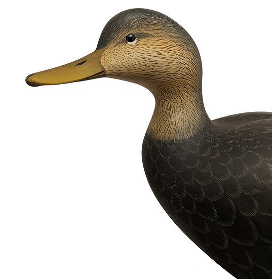 Standing Black Duck - George Strunk