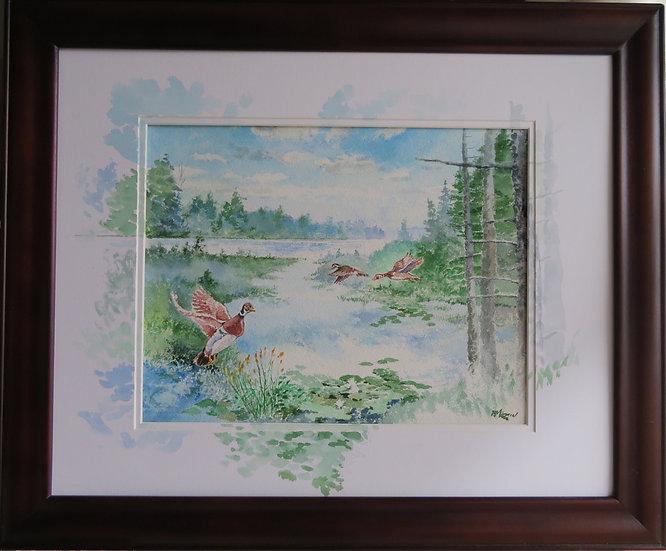Startled Wood Ducks - Paul Martin