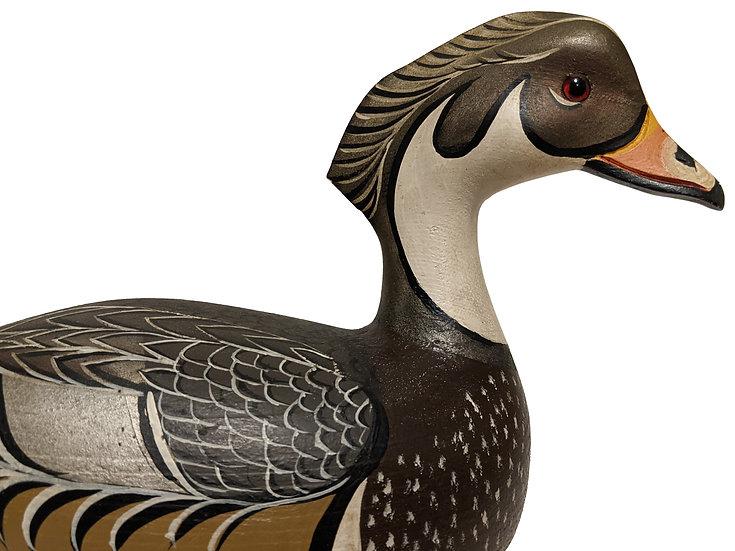 Wood Duck - Roy Conklin