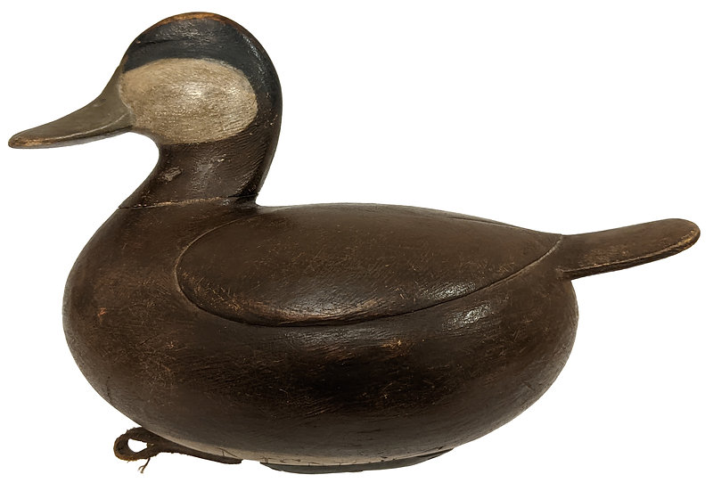 Ruddy Duck - Mark Mcnair