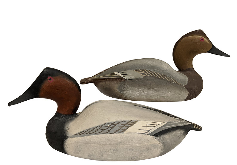 Canvasback Pair - Ward Brothers
