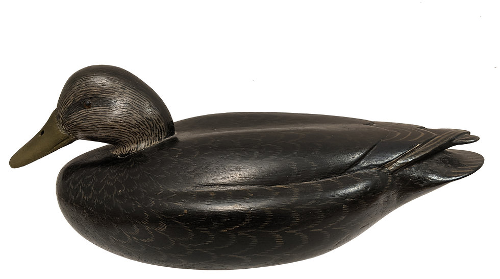 Black Duck - John McLoughlin