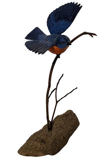 Eastern Bluebird - Helen Strong