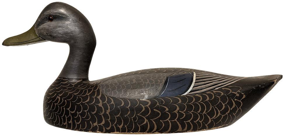 Black Duck - William Aiken