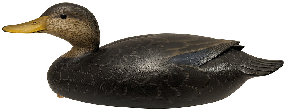 Black Duck - George Strunk