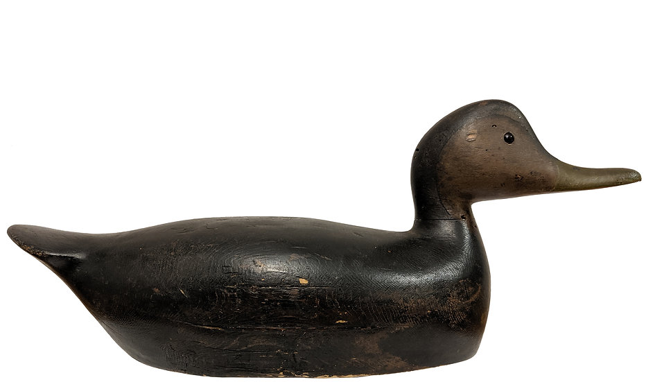 Black Duck - George H. Boyd